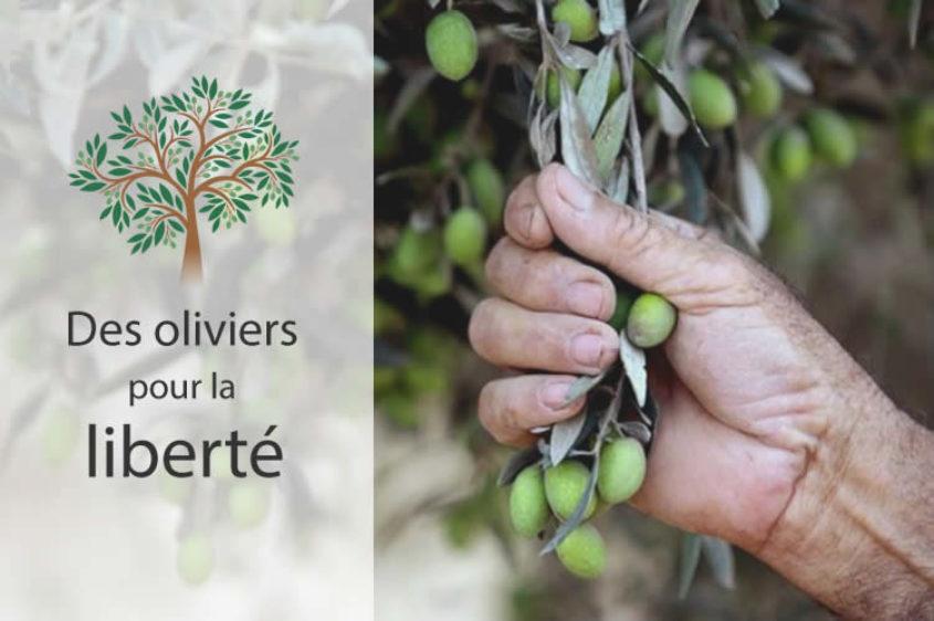 oliviers Palestine